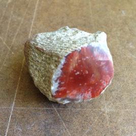 Red Horn Coral Elixir